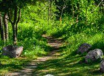 ashuelot trail