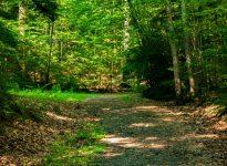 Horatio Colony Nature Preserve trail