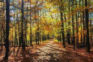 Rail Trail in Autumn